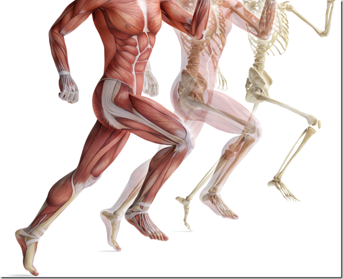 Runner's Anatomy