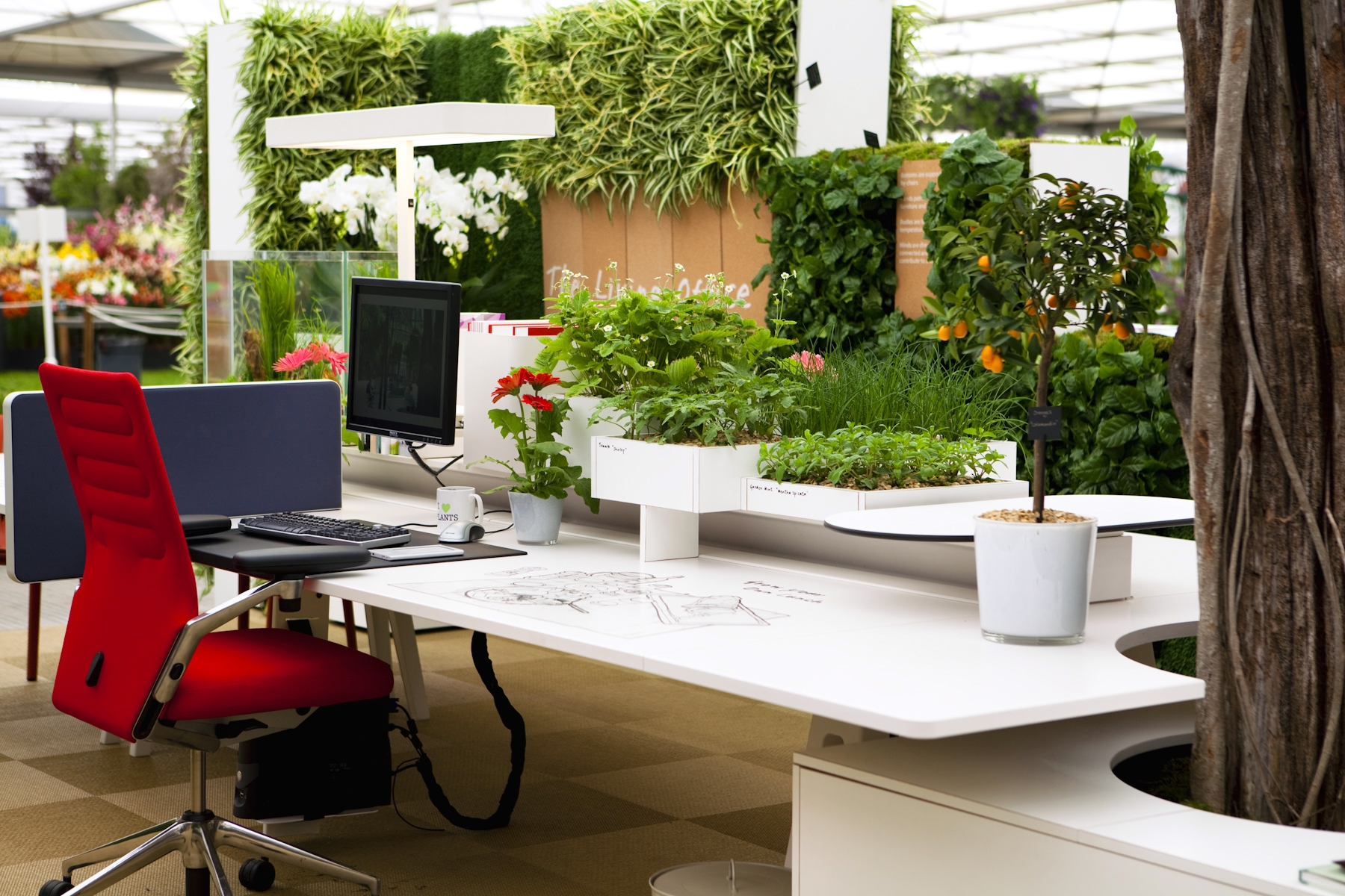 Plants In Offices Increase Happiness And Productivity
