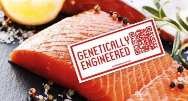 10 Foods EVERYBODY Mistake for Healthy: GMO Salmon