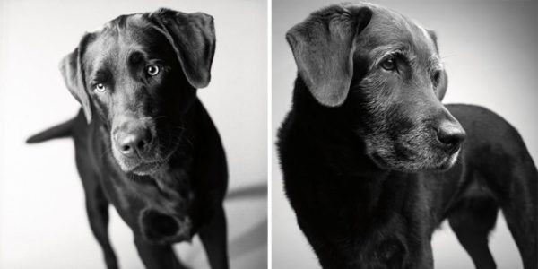 How dogs get older 13