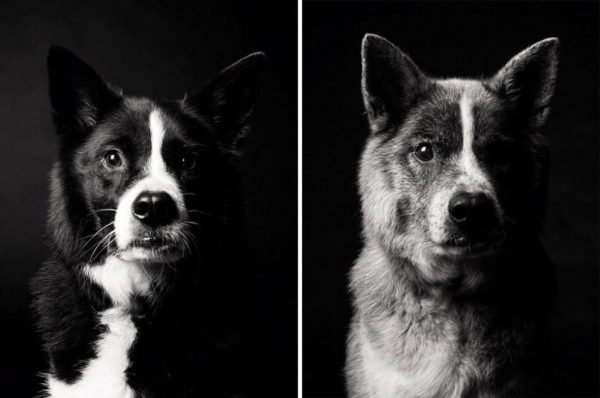 How dogs get older 4