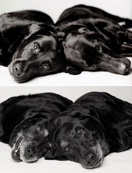 How dogs get older