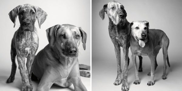 How dogs get older 8