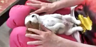 puppy-getting-massage