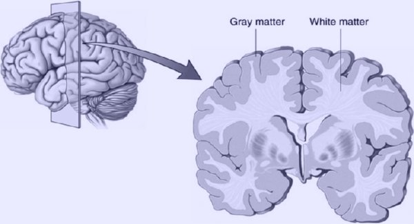 Harvard-MRI-Study-Shows-That-Meditation-Literally-Rebuilds-Your-Brain's-Gray-Matter-In-8-Weeks