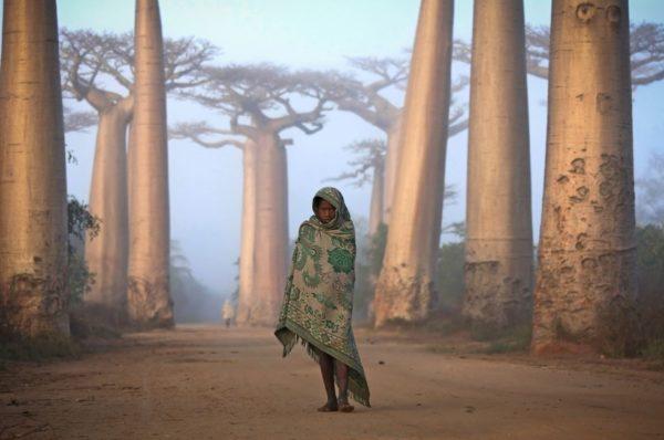 Malagasy girl among the Baobab trees.