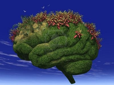 Your Brain is Like A Garden