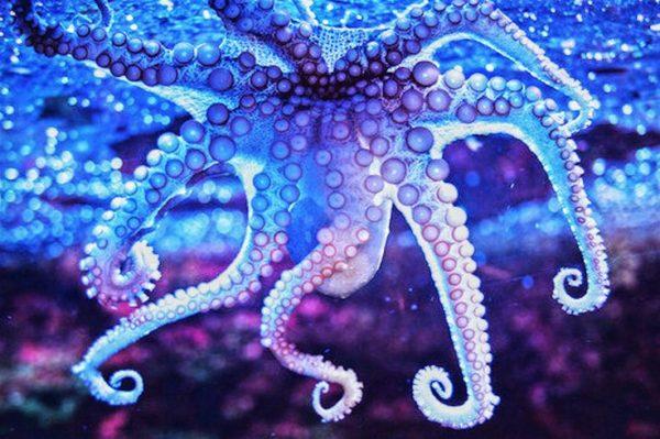 Octopus DNA Is Alien