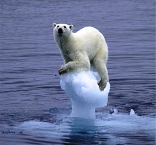 Polar Bear Standing On A Melting Ice