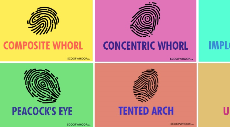 what-your-thumbprint-reveals-your-personality