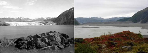 carroll-glacier-alaska-august-1906-september-2003