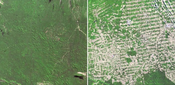 forests-in-rondonia-brazil-june-1975-august-2009