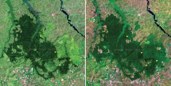 mabira-forest-uganda-november-2001-january-2006