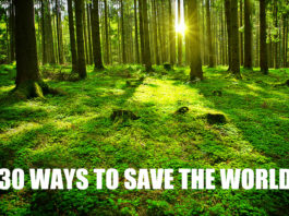 Things You Can Do To Save This Planet