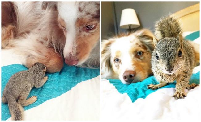 Dog Callie and Stewart the squirrel