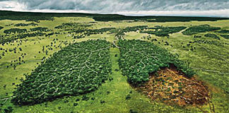 Norway First Country To Ban Deforestation