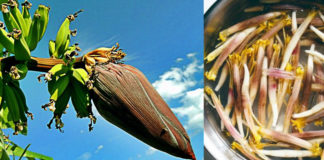 Banana Flower The Incredible Health Benefits