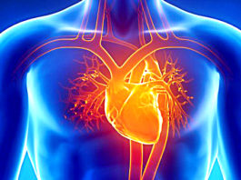 Research Proves Our Hearts Create Memories