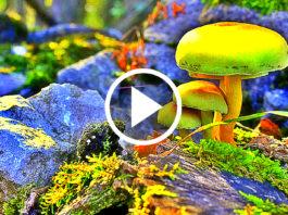 Hypnotizing Video Of Nature