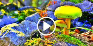 Hypnotizing Video Of Nature