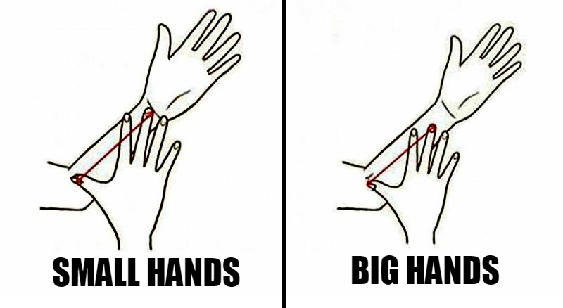 Size Of Your Arm Personality