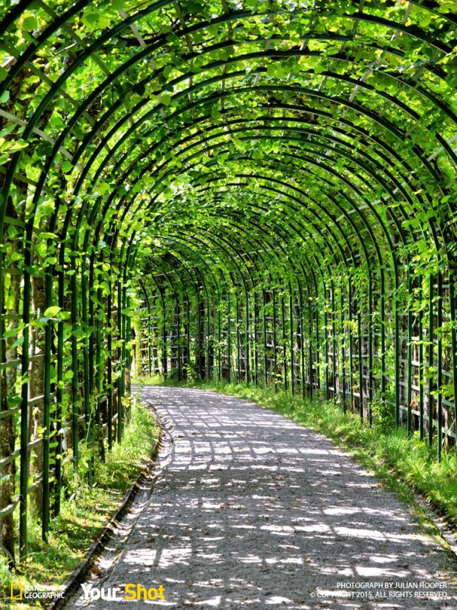 Walkway to heaven.