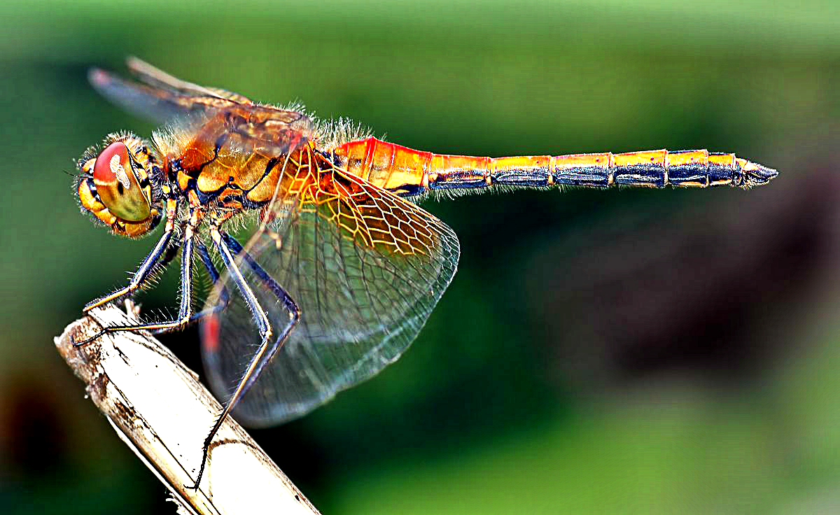 Cosmic Messages Seeing a Dragonfly