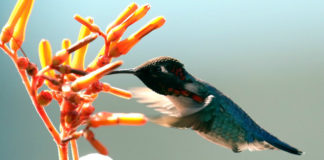 Cosmic Messages Seeing a Hummingbird