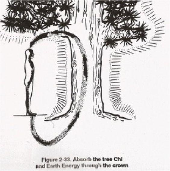 Tree Healing 1
