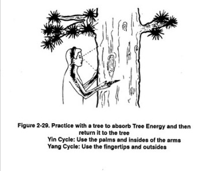 Tree Healing 3