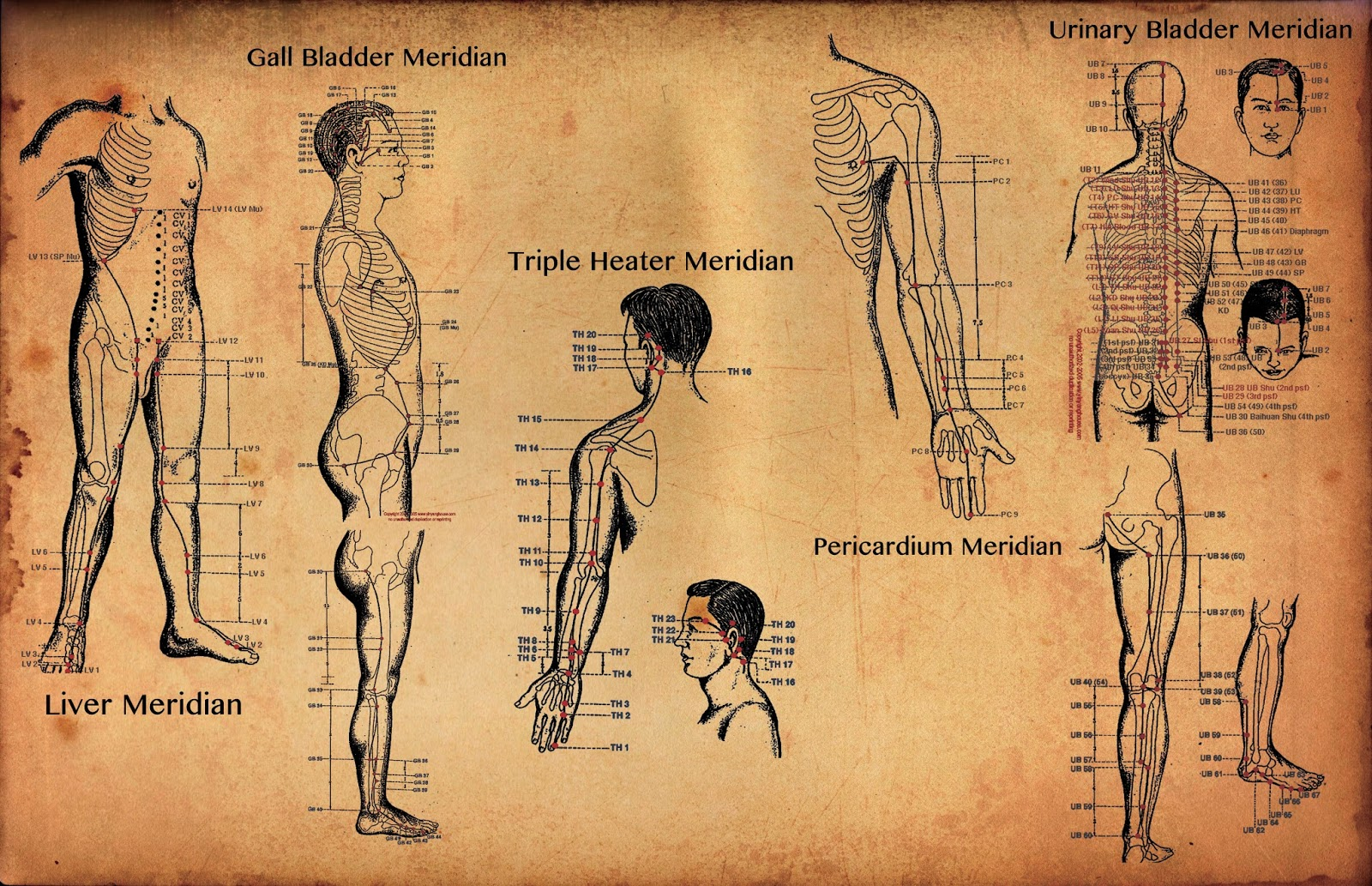 Scientific Research Proved Meridians Exist