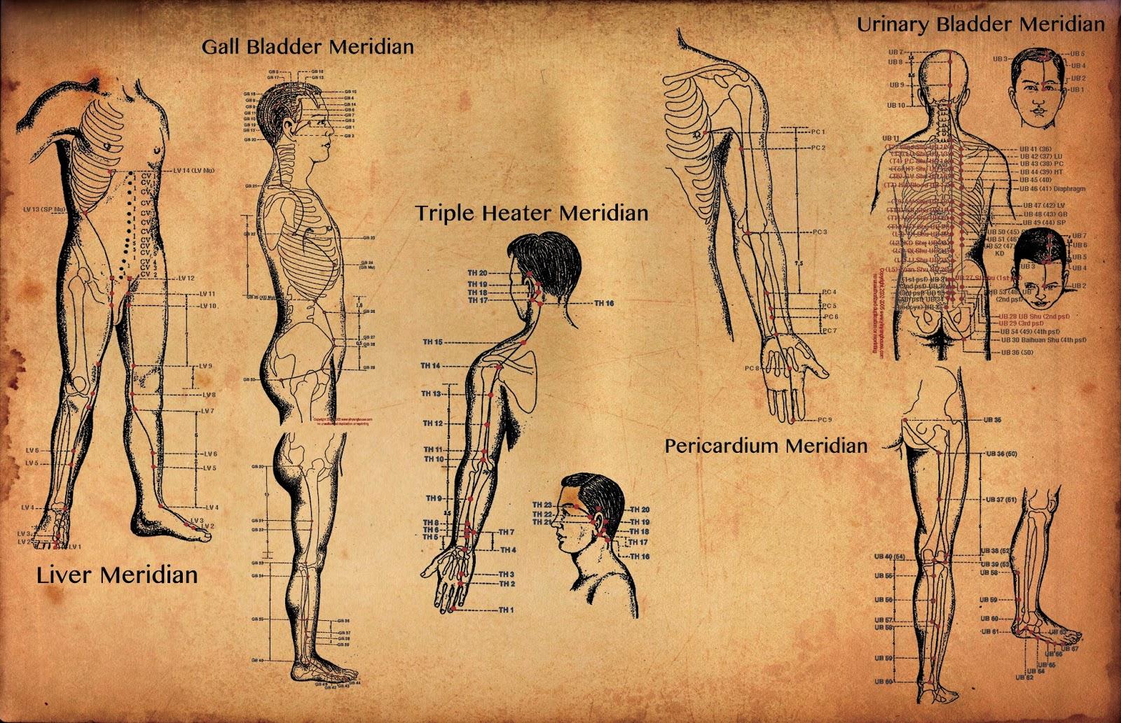 Меридианы человека картинки