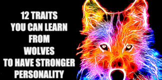 Traits You Can Learn From Wolves To Be Stronger Human Being