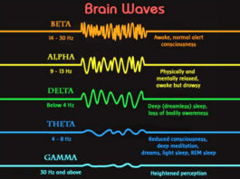 the-5-basic-brainwave-states-shapes-your-reality