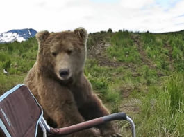 bear-sits-next-to-guy