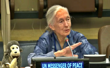 un-messenger-of-peace-how-we-can-make-the-world-a-better-place