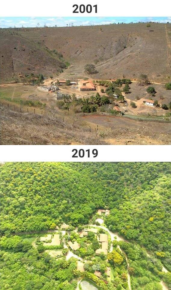 Couple Spends 20 Years Replanting An Entire Forrest And The Results Are Remarkable