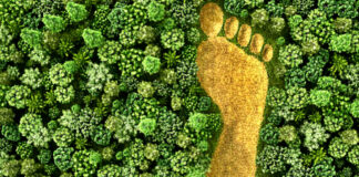 how-you-can-reduce-your-energy-footprint-on-the-planet