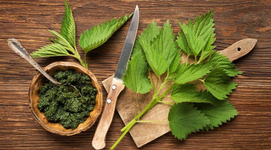 Rare Natural Soothing Teas Stinging Nettle