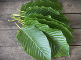 what-is-kratom-and-the-benefits-it-provides