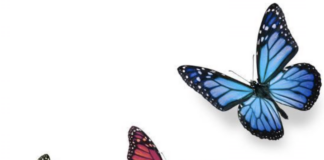 cool-things-didnt-know-butterfly-wing-color
