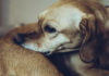 home-remedies-for-dogs-with-dry-skin